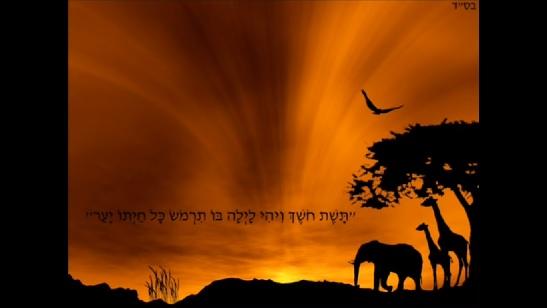 Chassof - Yaakov Shwekey